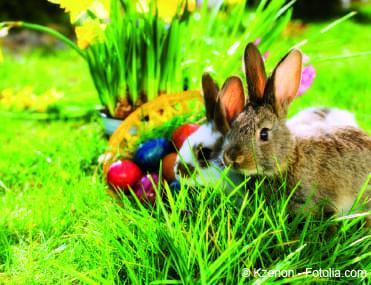 Bild von Frohe Ostern – Warum ein Hase Eier bringt