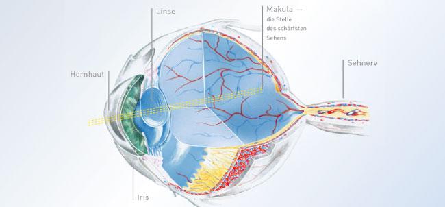 Bild von Das Fenster des Auges lässt sich ersetzen