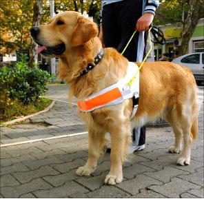 """Bild von Der Blindenführhund – wie wir """"Sehenden"""" helfen können """"Woche des Sehens"""""""