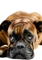 Bild von Sonnenbrille für den Hund