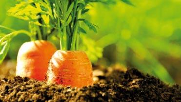 Bild von Gesundes Gemüse  für die Augen