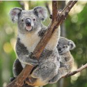 Bild von Ein Besuch im Zoo
