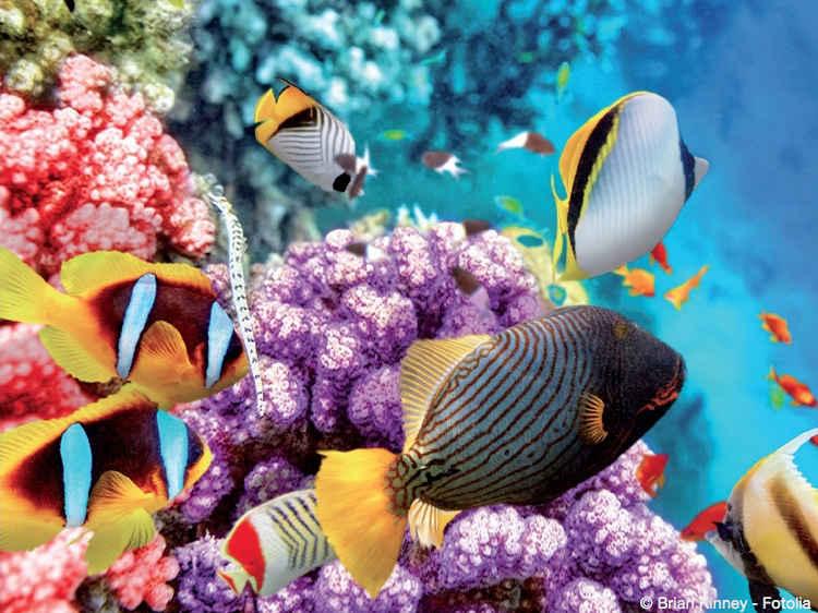 Bild von Verschwenderische Pracht – Farbenspektakel unter Wasser