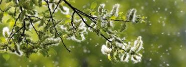 Bild von Die Pollen greifen wieder an