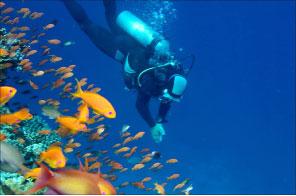 Bild von Tauchsport und das Sehen unter Wasser
