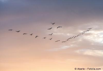 Bild von Sehenswert: Die Rückkehr der Zugvögel