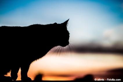 Bild von Alltägliches: Warum sehen Katzen im Dunkeln?