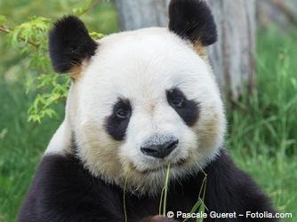 Bild von Panda-Blick – Schadet wasserfeste Mascara den Wimpern?