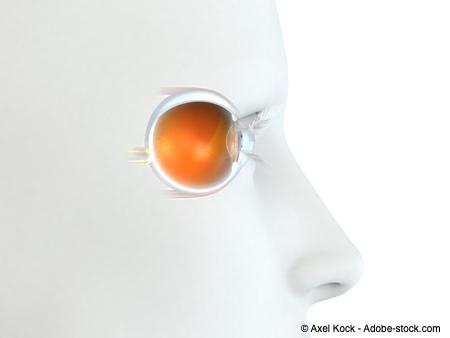 Bild von Glaukom-Wissen: Das leistet der Sehnerv