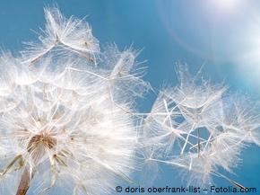 Bild von Pollenallergie – Voll ins Auge!