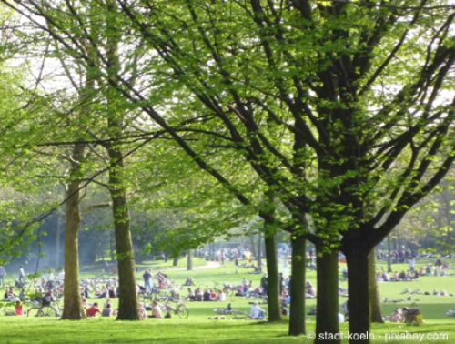 Bild von Grüne Stadt – Wald und Baum in Köln