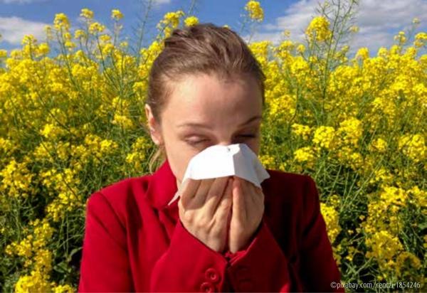 Bild von Blütenpollen – Warum reagieren Allergiker?